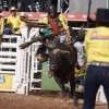 Festa do Peão de Barretos confirma competidores internacionais no Rodeio Junior